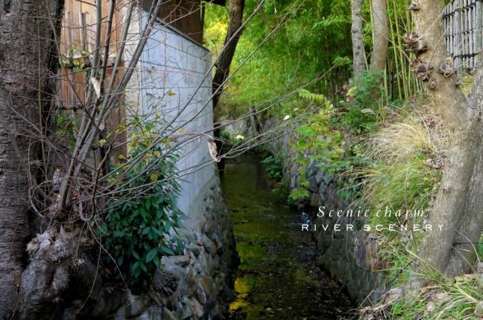 2015 年の瀬の奈良。。。_c0220065_23595631.jpg