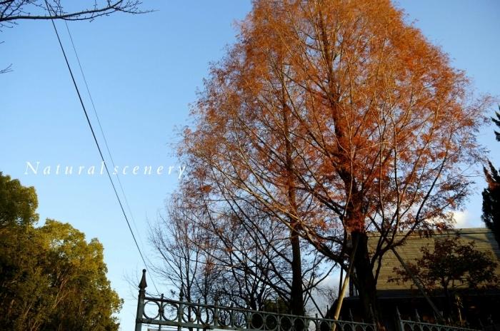 2015 年の瀬の奈良。。。_c0220065_23595800.jpg