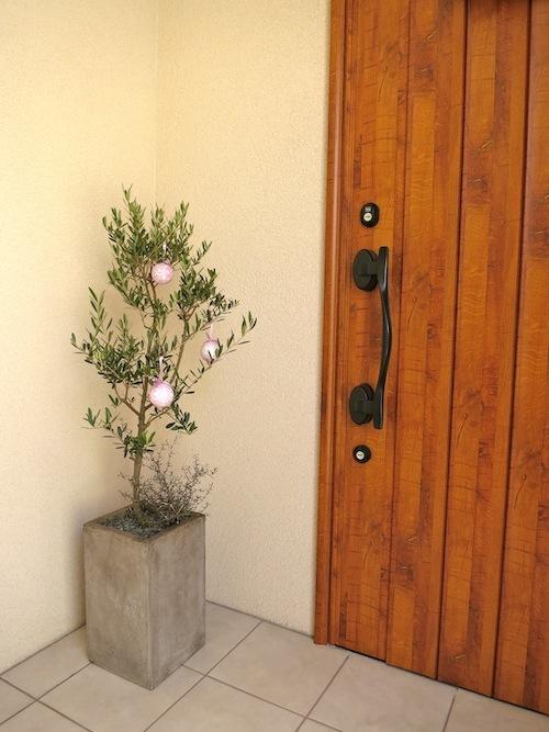 ☆それぞれのクリスマス☆(植物編)_f0324766_16030916.jpg