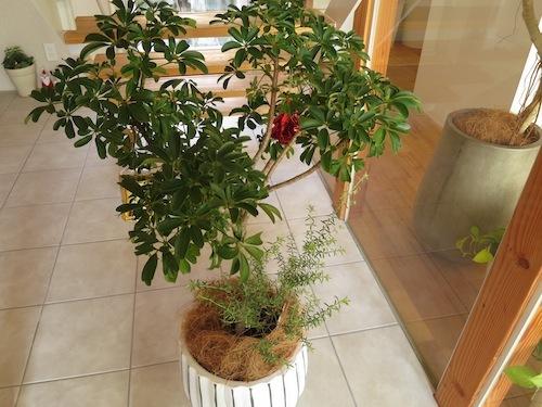 ☆それぞれのクリスマス☆(植物編)_f0324766_16464371.jpg