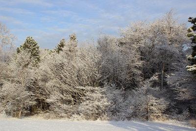 つかの間の雪景色_c0353373_22415743.jpg