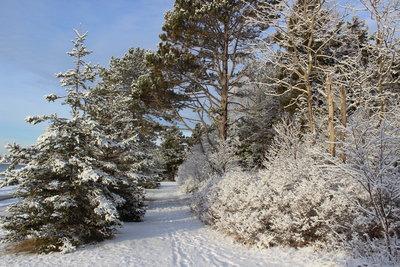 つかの間の雪景色_c0353373_22420119.jpg