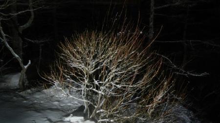 雪明かりと月_e0120896_07120014.jpg