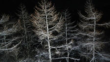 雪明かりと月_e0120896_07122148.jpg