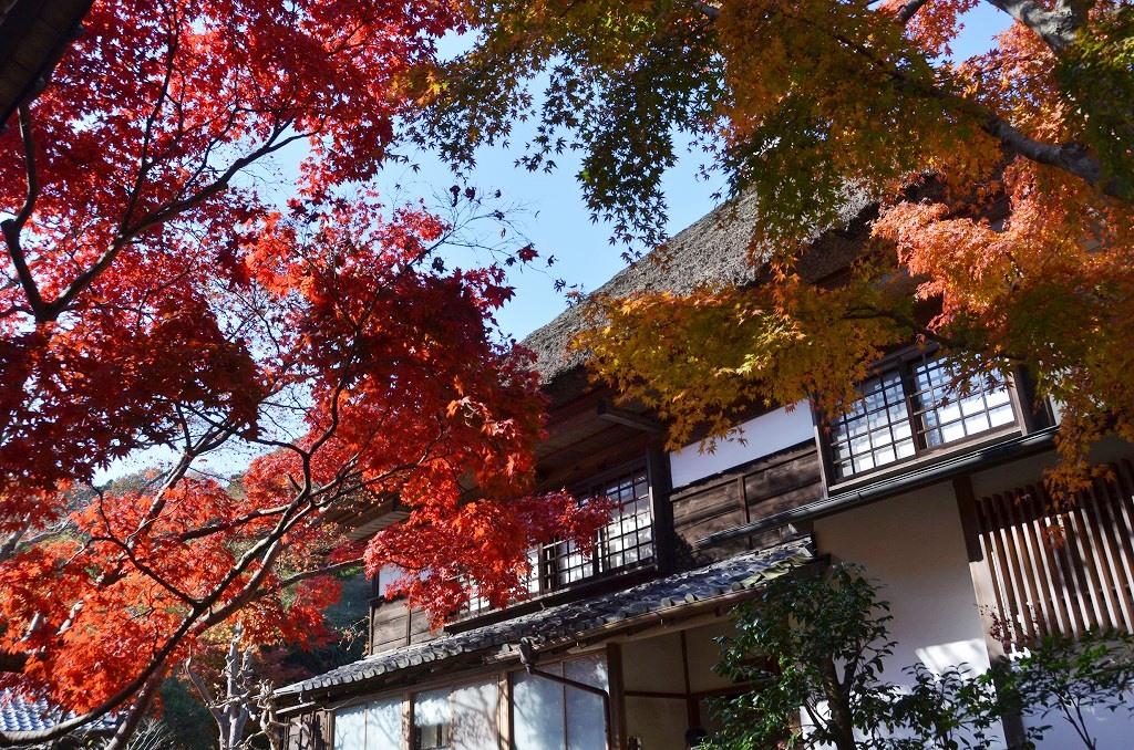 鎌倉紅葉 海蔵寺_d0065116_211061.jpg