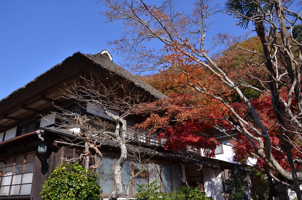 鎌倉紅葉 海蔵寺_d0065116_21113024.jpg