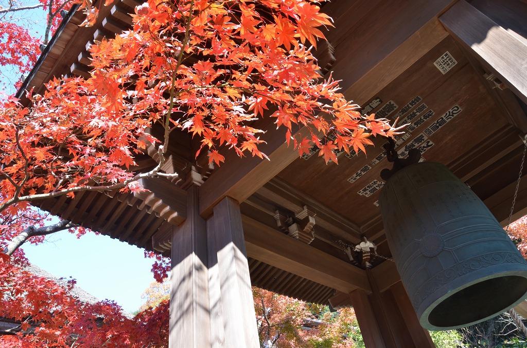 鎌倉紅葉 海蔵寺_d0065116_21141990.jpg