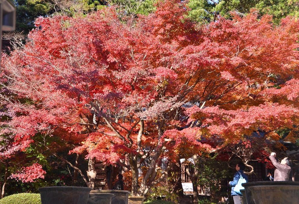 鎌倉紅葉 覚園寺_d0065116_2120556.jpg