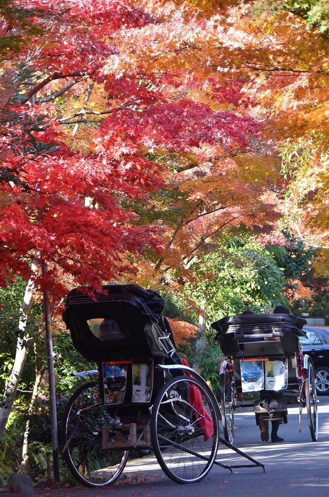 鎌倉紅葉 海蔵寺_d0065116_2125583.jpg