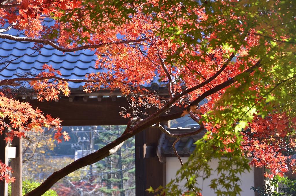 鎌倉紅葉 覚園寺_d0065116_21422836.jpg