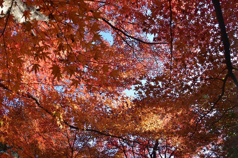 鎌倉紅葉 覚園寺_d0065116_21432247.jpg