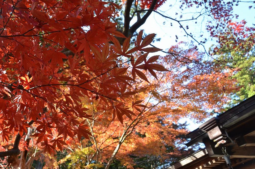 鎌倉紅葉 覚園寺_d0065116_21462665.jpg