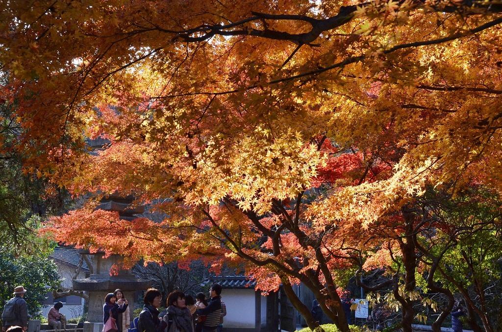 鎌倉紅葉 覚園寺_d0065116_21542796.jpg