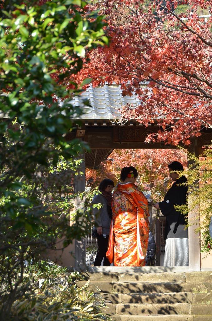 鎌倉紅葉 海蔵寺_d0065116_2175246.jpg