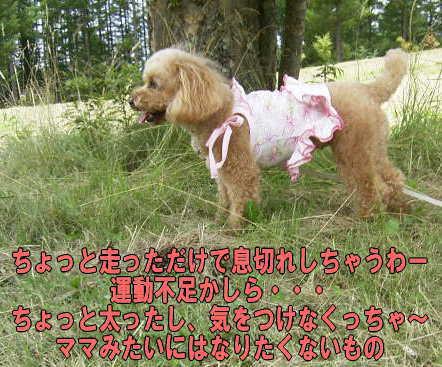 b0183917_20501247.jpg