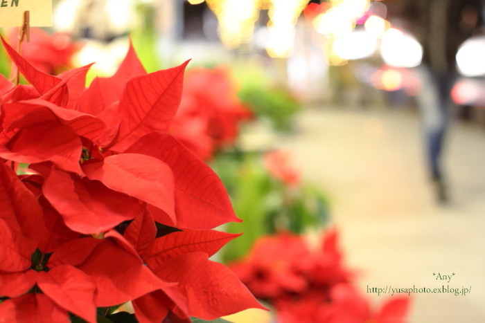 Christmas  Eve_e0347431_11570841.jpg