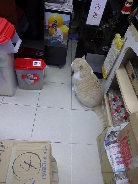 忌廉哥 大接近?!_b0248150_19461524.jpg