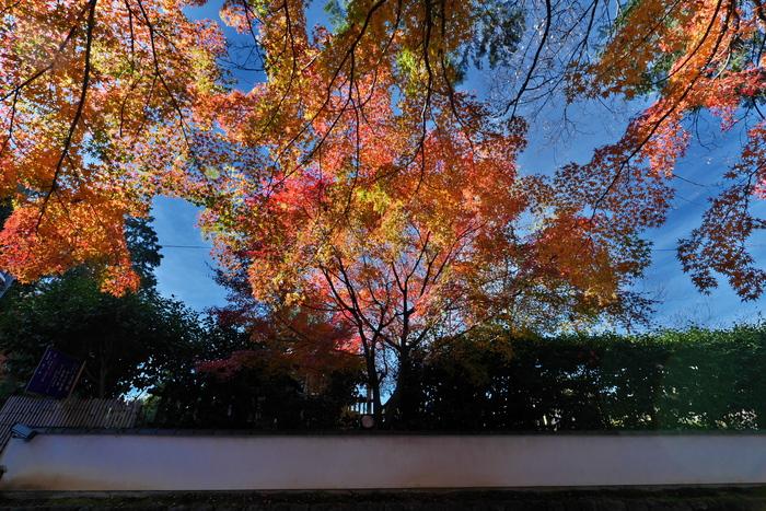 紅葉2015   東福寺                       _f0021869_22165198.jpg