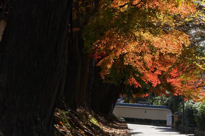 紅葉2015   東福寺                       _f0021869_2217198.jpg