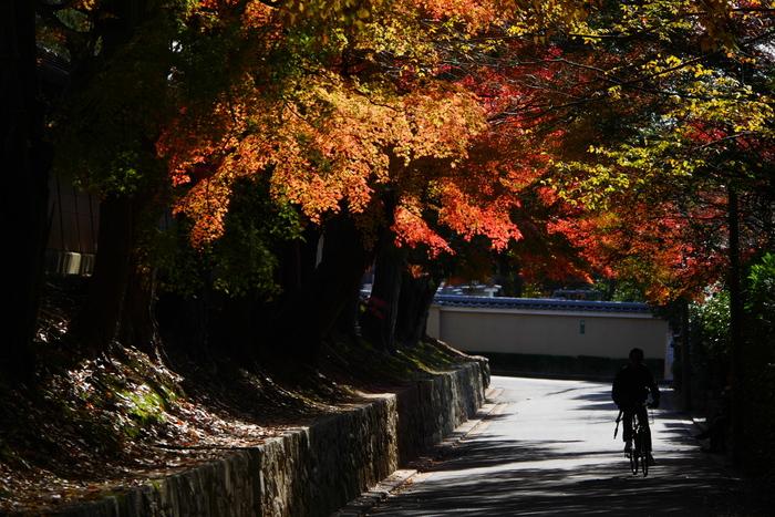 紅葉2015   東福寺                       _f0021869_22175339.jpg
