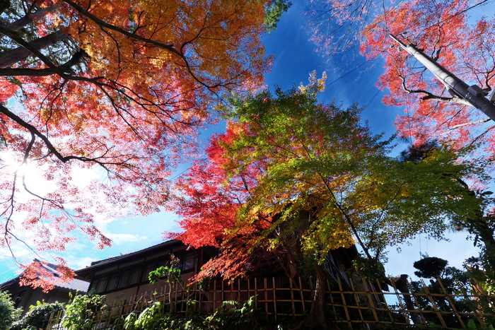 紅葉2015   東福寺                       _f0021869_225326.jpg