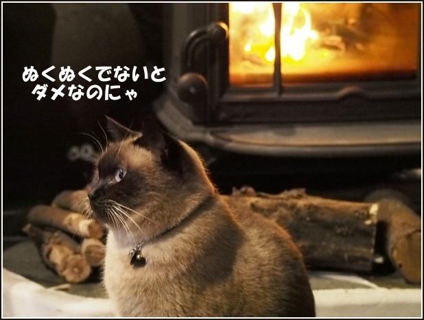 寒さに弱く.._c0228386_23513739.jpg