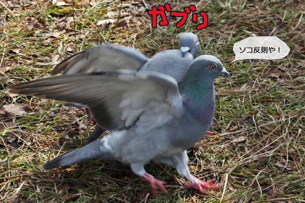 b0174191_00260619.jpg