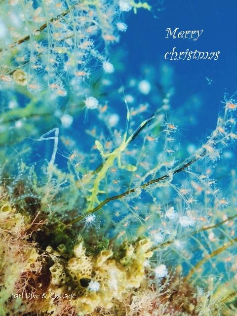 ブログコラボ企画◆クリスマス_c0211615_18322957.jpg