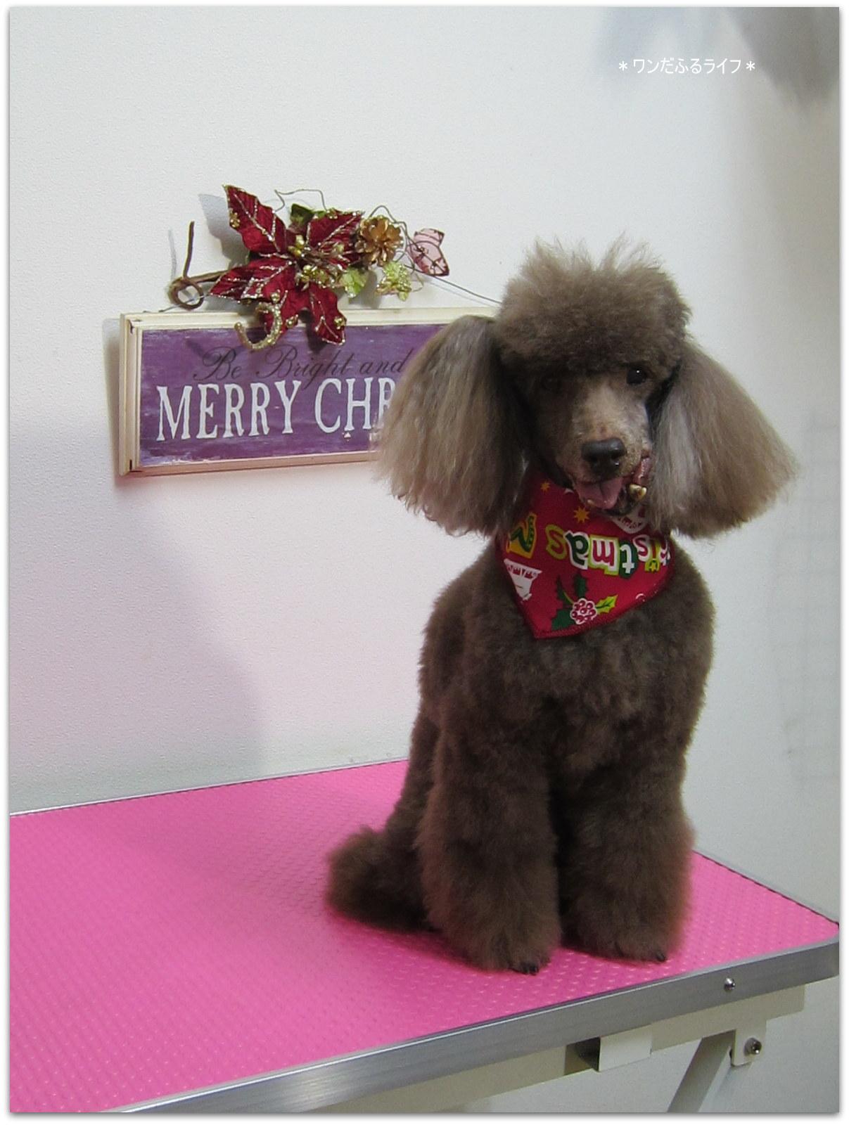 * メリークリスマス!! *_d0317115_227188.jpg