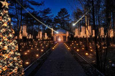 森の中のクリスマス_d0035921_9383762.jpg