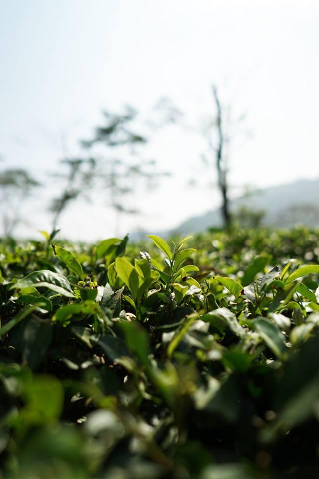 Darjeeling Jungpana & Badamtam_e0063335_21273236.jpg