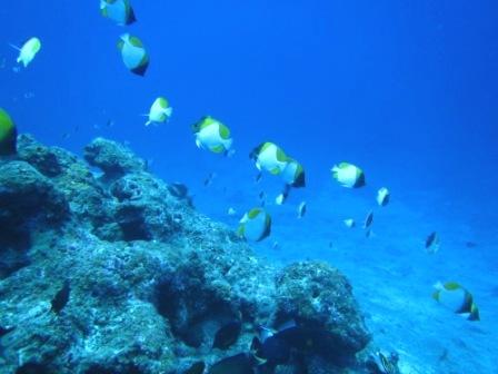 透明度最高な黒島へ~♪_a0189838_1601513.jpg