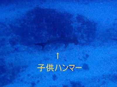 12月23日 快晴、温暖_d0113459_832876.jpg