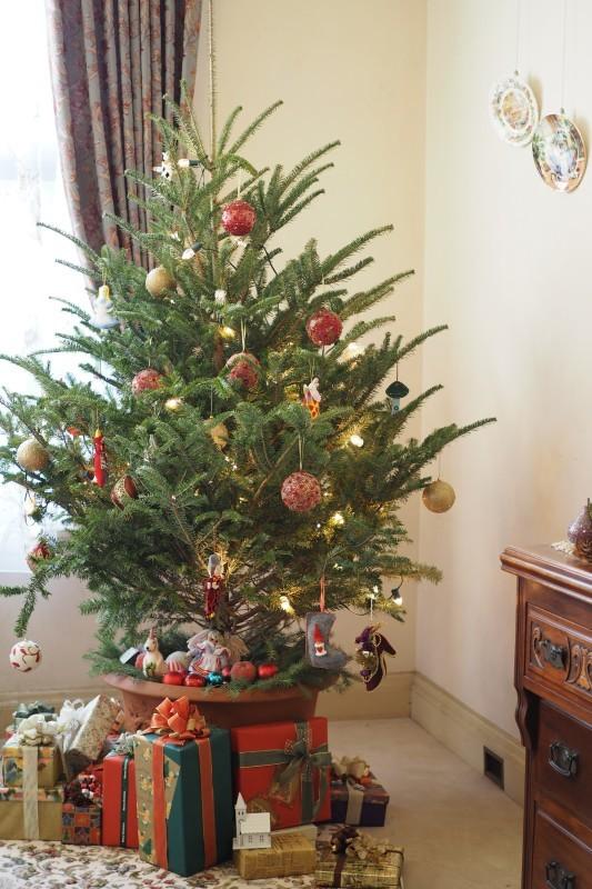 クリスマスツリー_a0292060_14054643.jpg