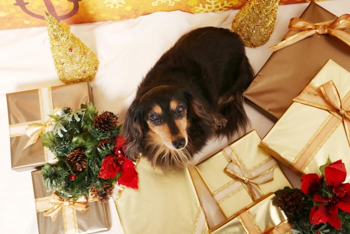 2015 Christmas eve 撮影しちゃった ①_c0134862_0112327.jpg