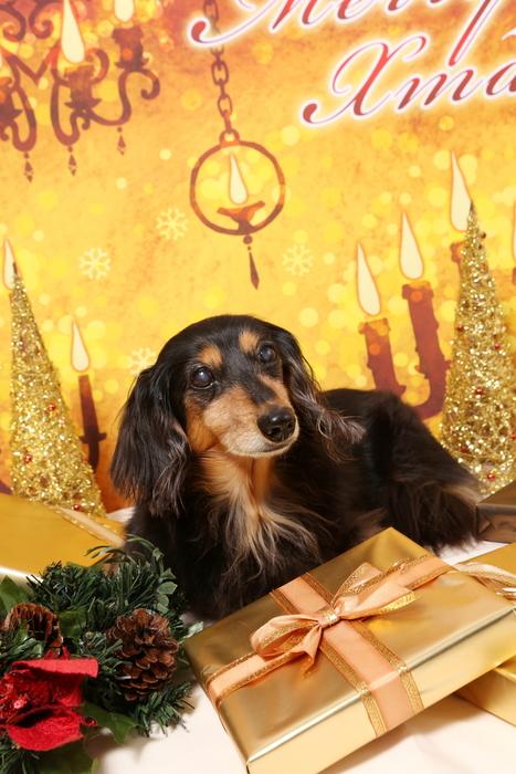 2015 Christmas eve 撮影しちゃった ①_c0134862_0113060.jpg