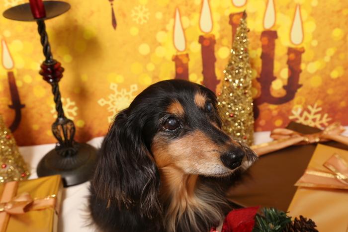 2015 Christmas eve 撮影しちゃった ①_c0134862_0114236.jpg
