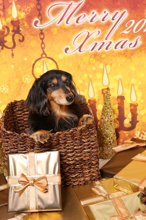 2015 Christmas eve 撮影しちゃった ①_c0134862_011476.jpg