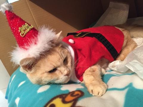 メリークリスマス_d0118165_19153522.jpg