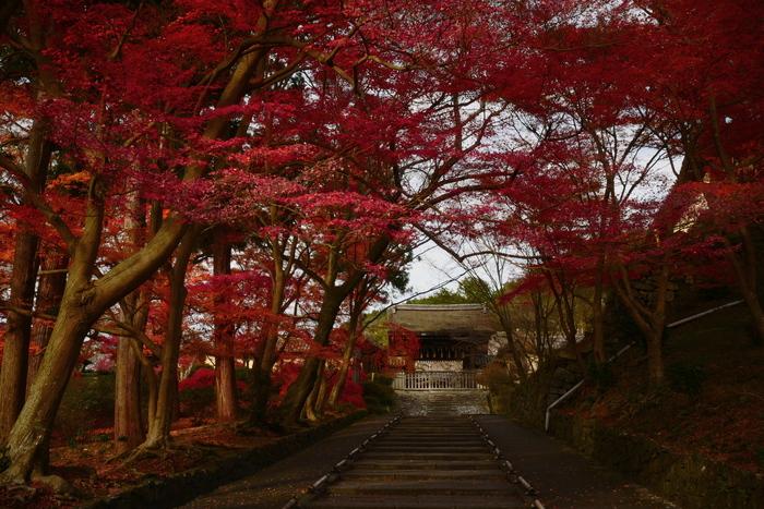 紅葉2015   毘沙門堂                         _f0021869_23173562.jpg