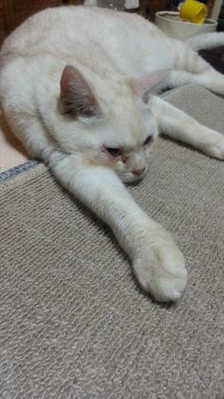 ぐったり猫_f0228680_9204457.jpg