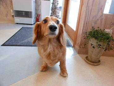 モデル犬。。。です!_b0186183_16315513.jpg