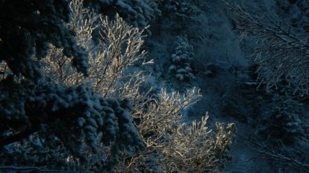 雪景色の朝_e0120896_07542936.jpg