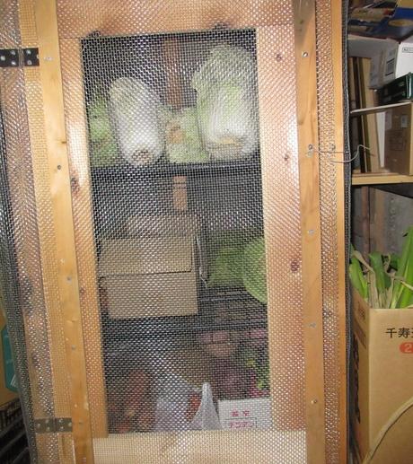 ネズミ退散野菜棚_a0203003_19515428.jpg