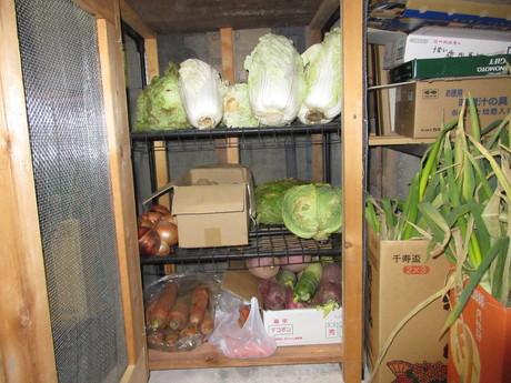 ネズミ退散野菜棚_a0203003_195235100.jpg