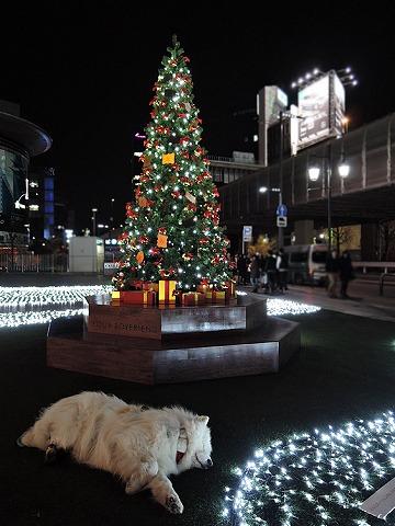 Merry Christmas!_c0062832_12211595.jpg