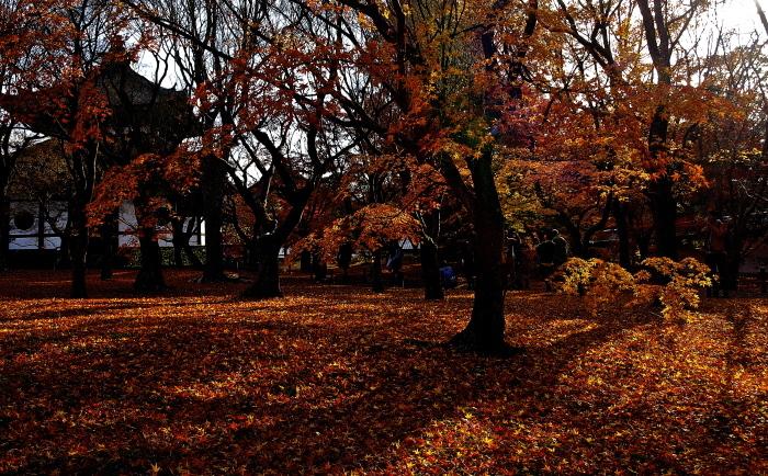 葉は散れど‥‥_f0315034_15221924.jpg