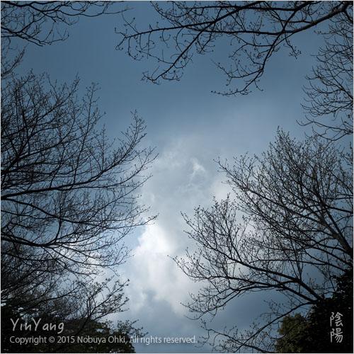 春の空、静岡_e0139738_1022082.jpg