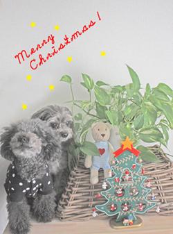 merry Christmas ☆_f0170352_15355546.jpg