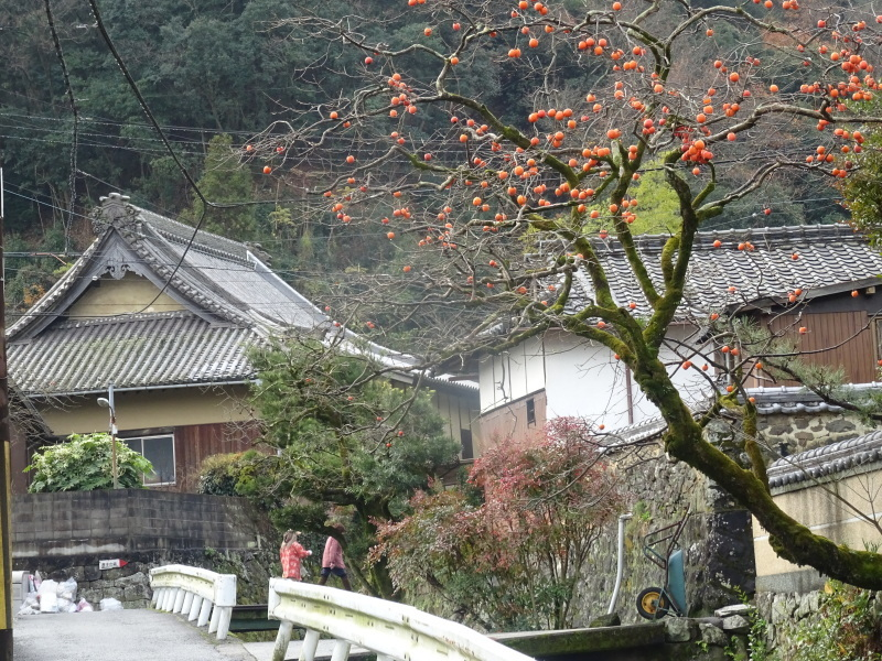 孝子駅に「みさき里山クラブ」が門松を寄贈しました _c0108460_20404085.jpg